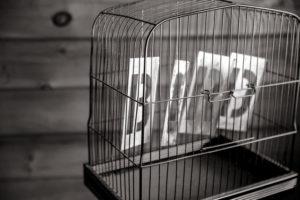 no-bird-in