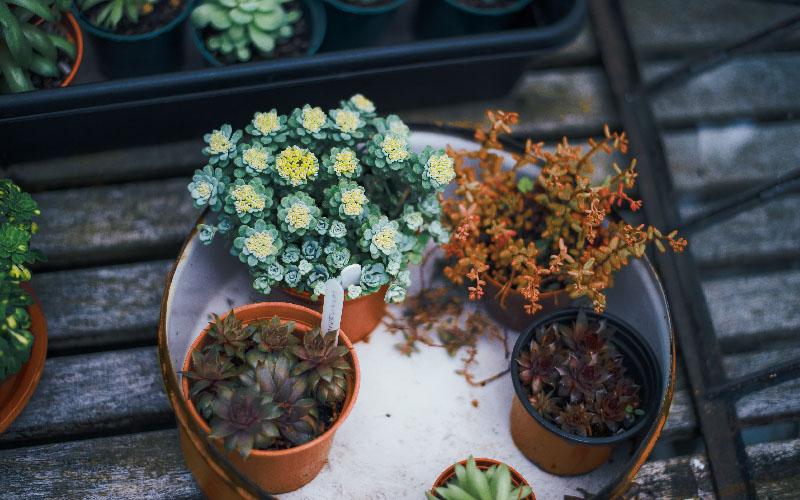 vertroetel-je-plant