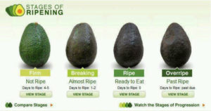 stages of riping avocado