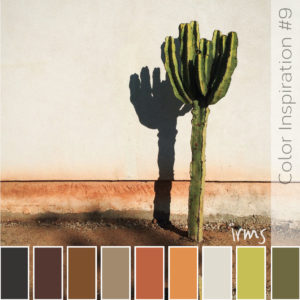 lonely-cactus-color