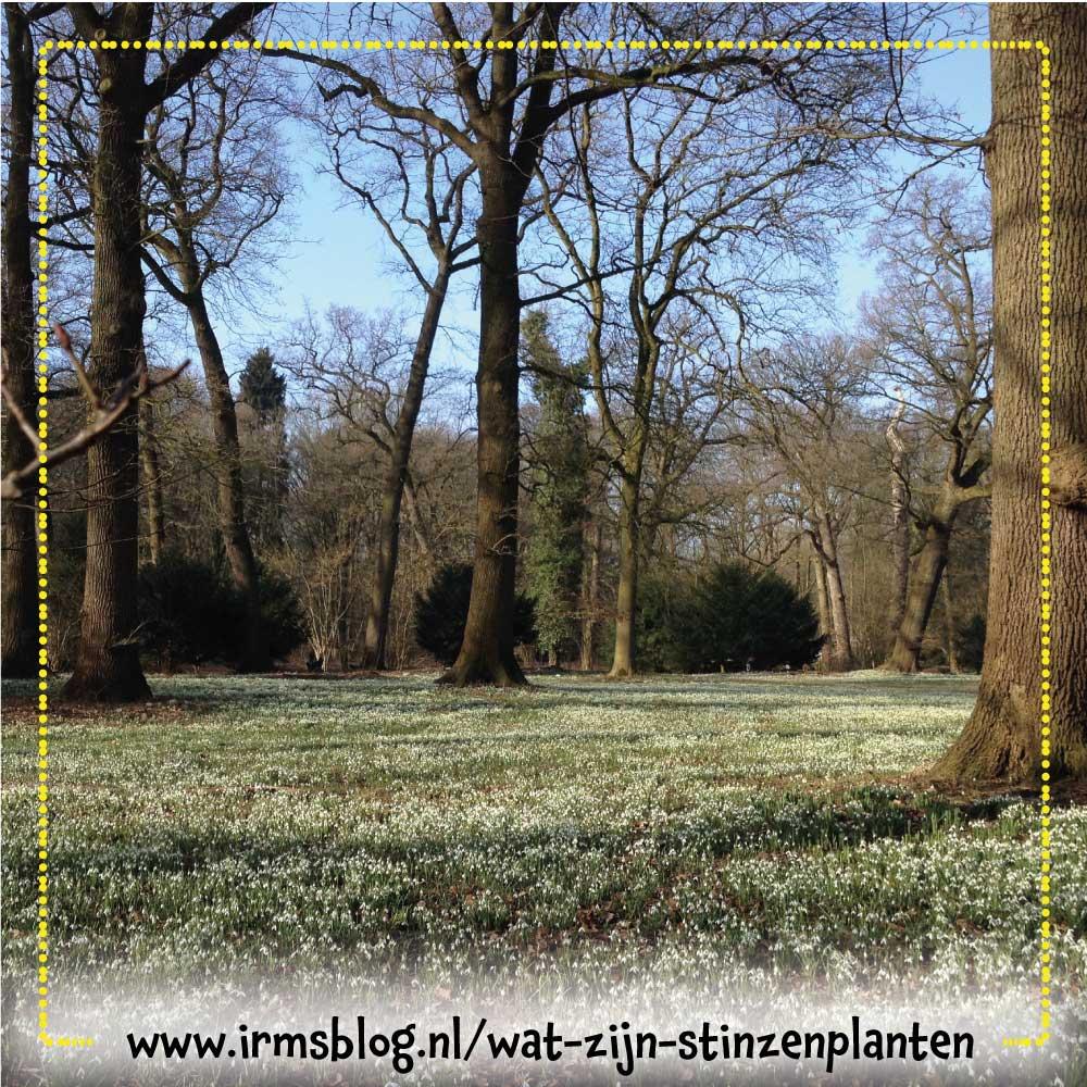 sneeuwklokjes-amelisweerd
