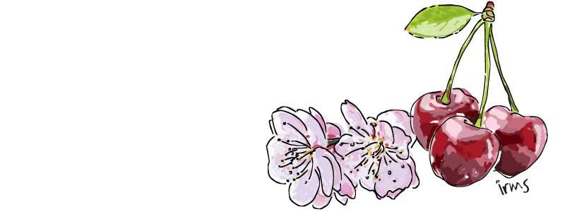 kersen-illustratie-irms