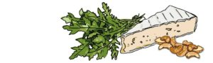 brie-rucola-illustration