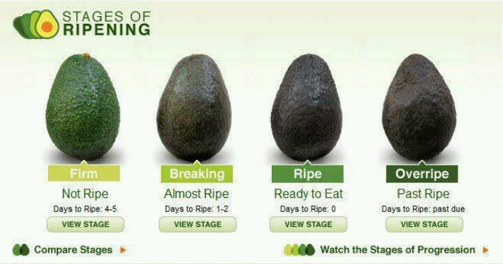 stages-of-ripening-avocado