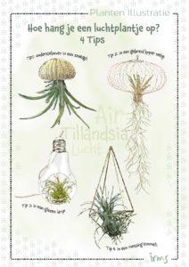 luchtplantjes-mini-poster
