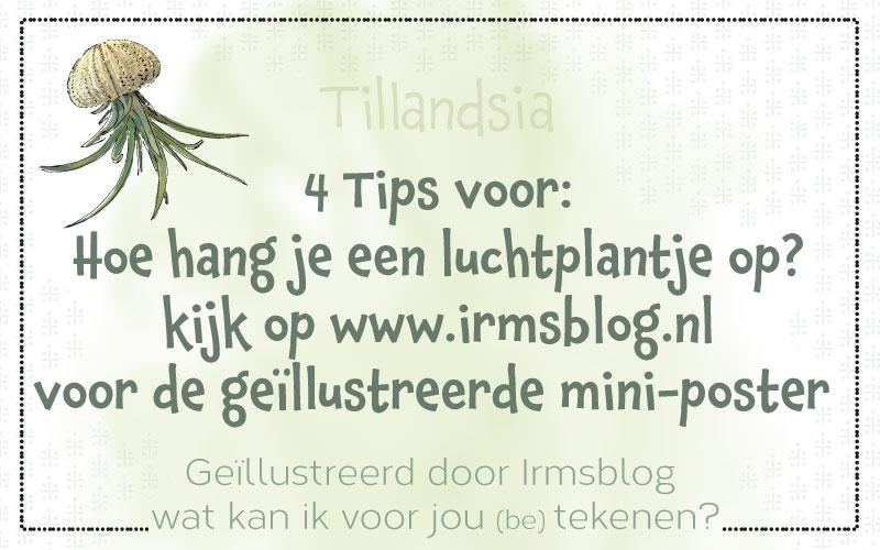 Luchtplantjes ophangen, geïllustreerde poster met 4 tips
