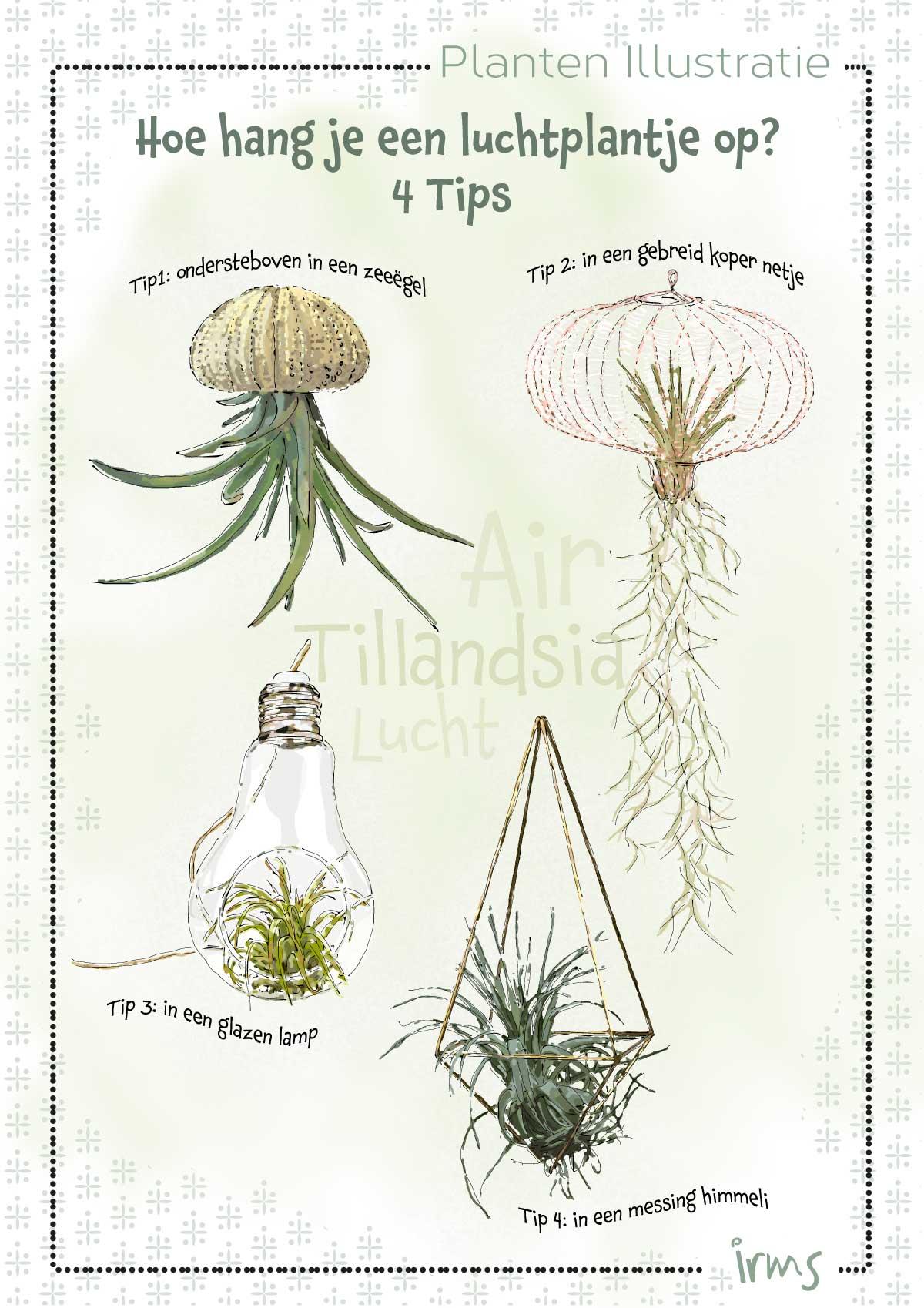 luchtplantjes-mini-poster-irmsblog