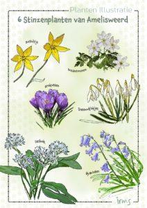 stinzelplanten