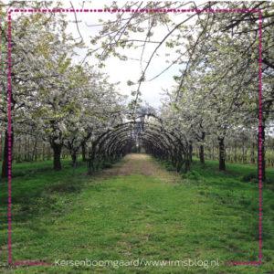 kersenboomgaard-irmsblog