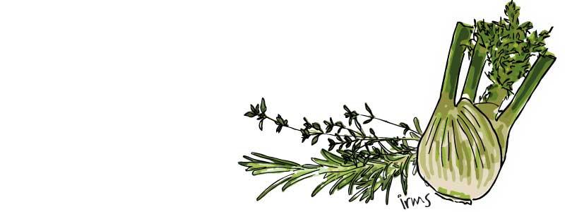 venkel-kruiden-illustratie-irms