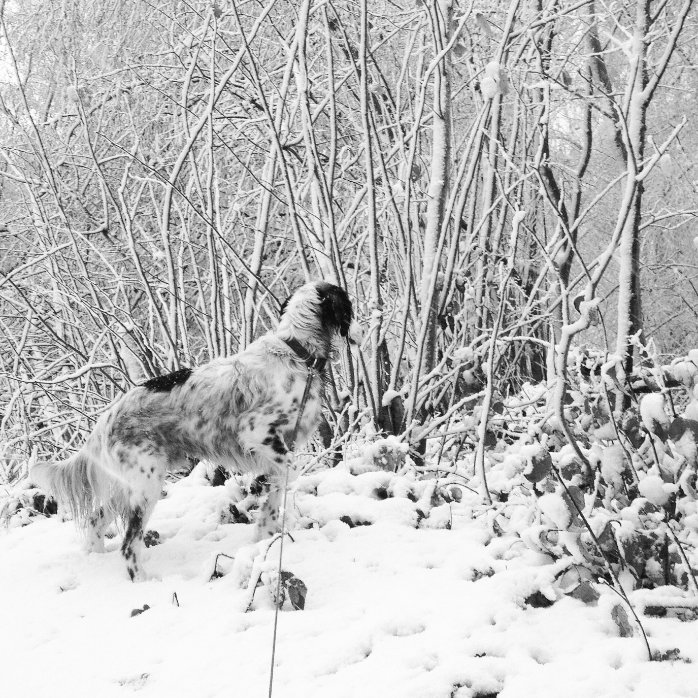 kiko in de sneeuw irmsblog