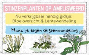 stinzenplanten-amelisweerd-header